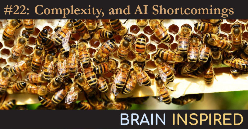 BI 022 Melanie Mitchell: Complexity, and AI Shortcomings