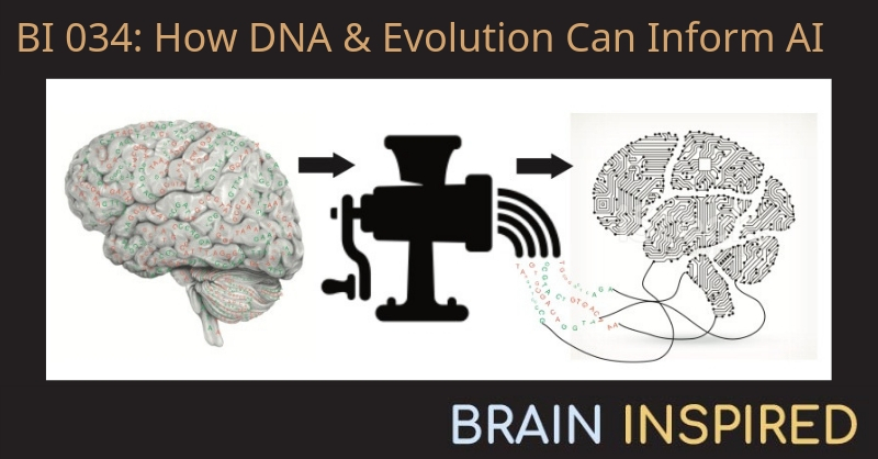 BI 034 Tony Zador: How DNA and Evolution Can Inform AI