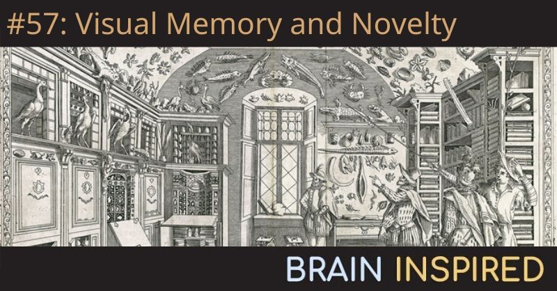 BI 057 Nicole Rust: Visual Memory and Novelty