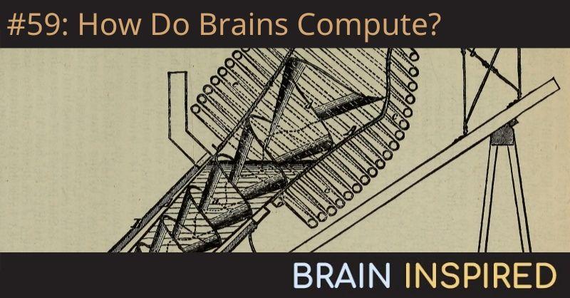 BI 059 Wolfgang Maass: How Do Brains Compute?