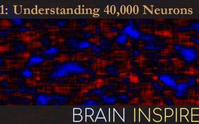BI 091 Carsen Stringer: Understanding 40,000 Neurons